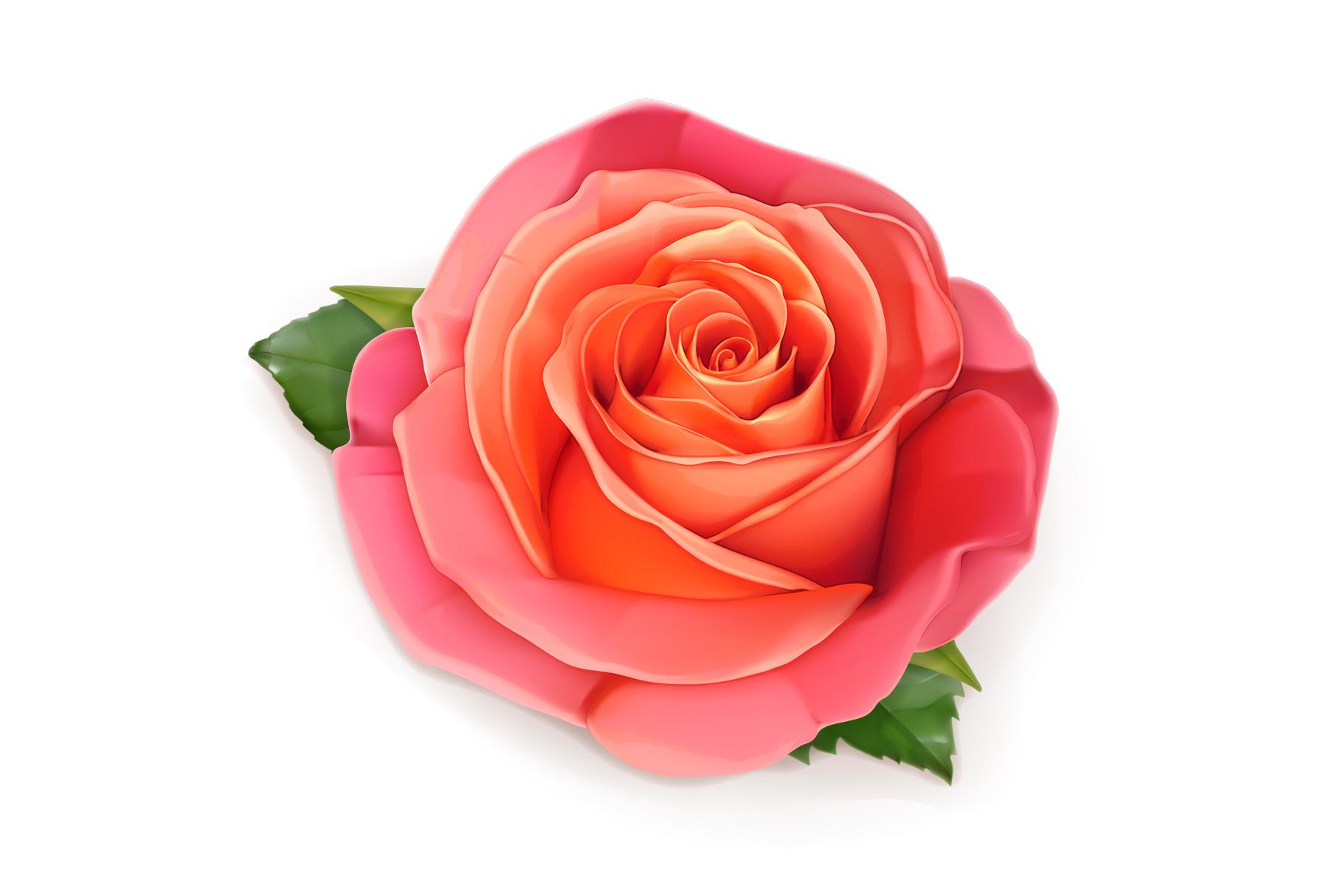 Rose, symbol of love, romantic Valentine's Day, vectors set example image 5
