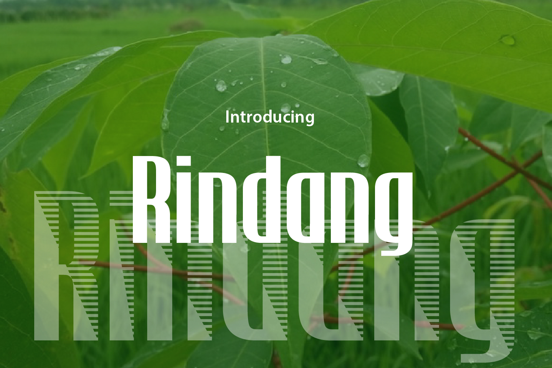 Rindang example image 2