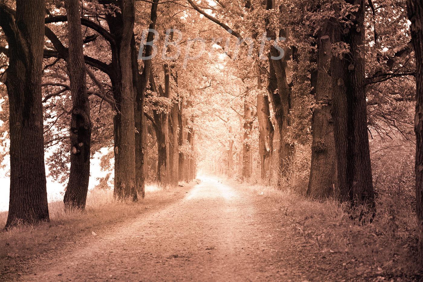 Nature photo, landscape photo, autumn alley photo, example image 1