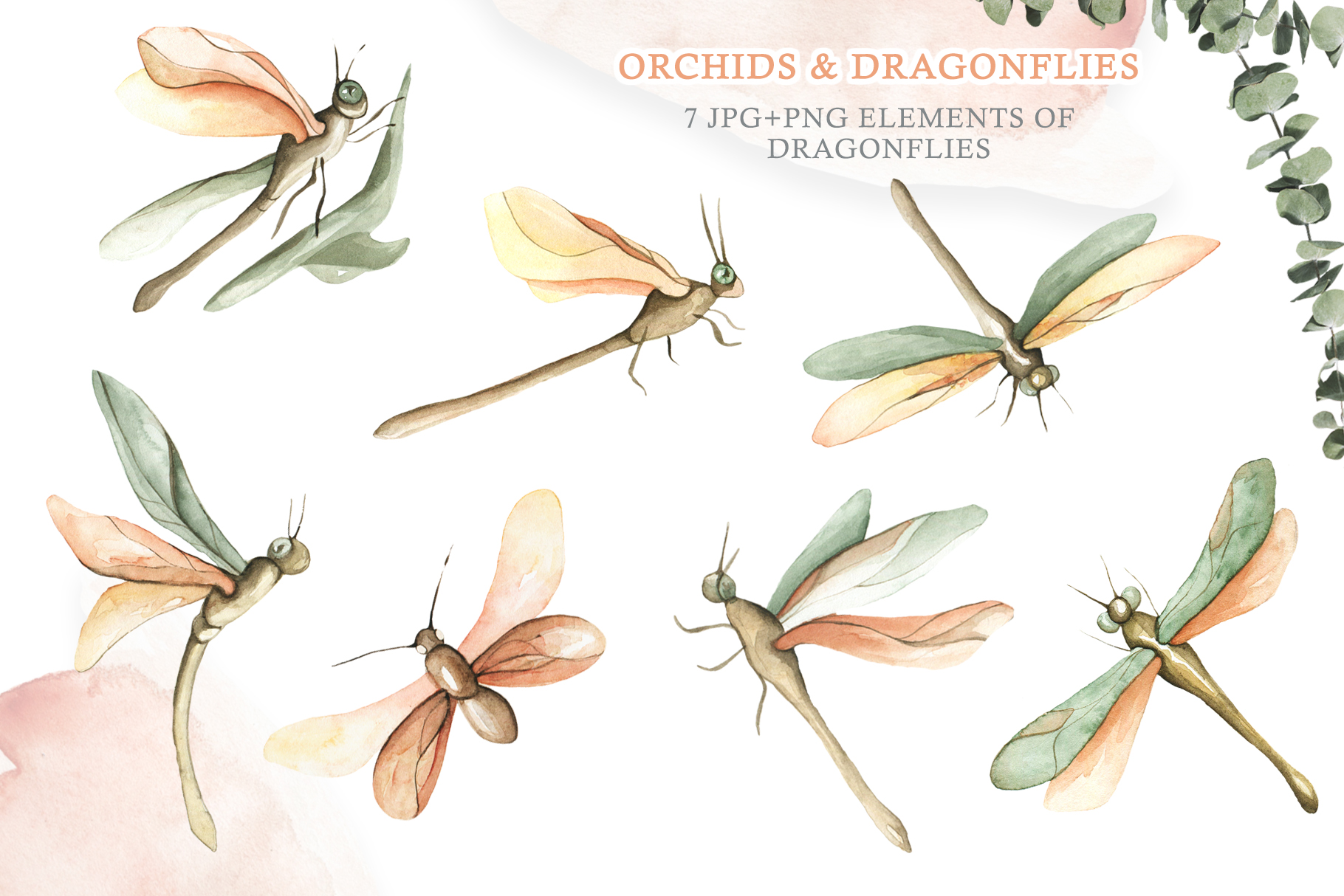 Watercolor Set Orchids and Dragonflies example image 3