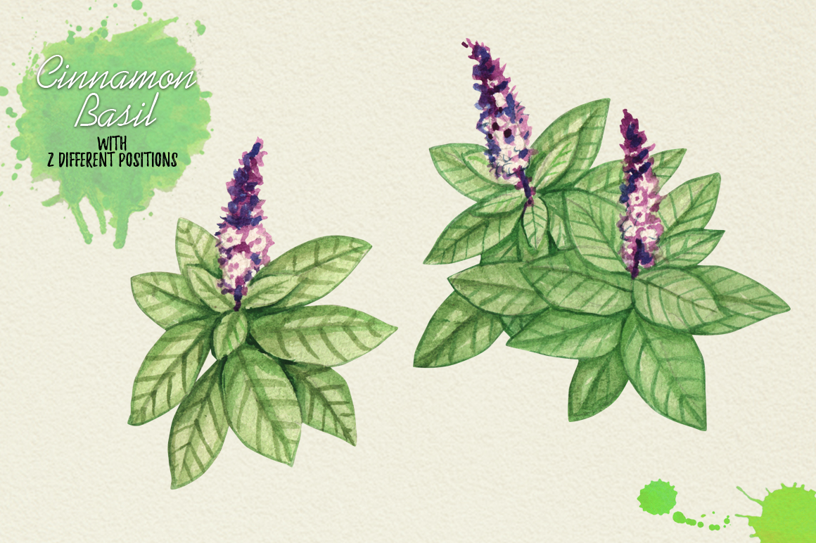 North American Herbs example image 7