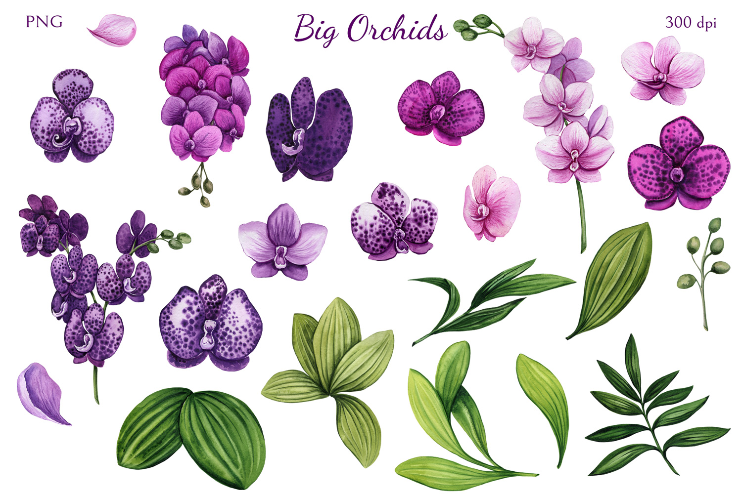 Big Orchids example image 2