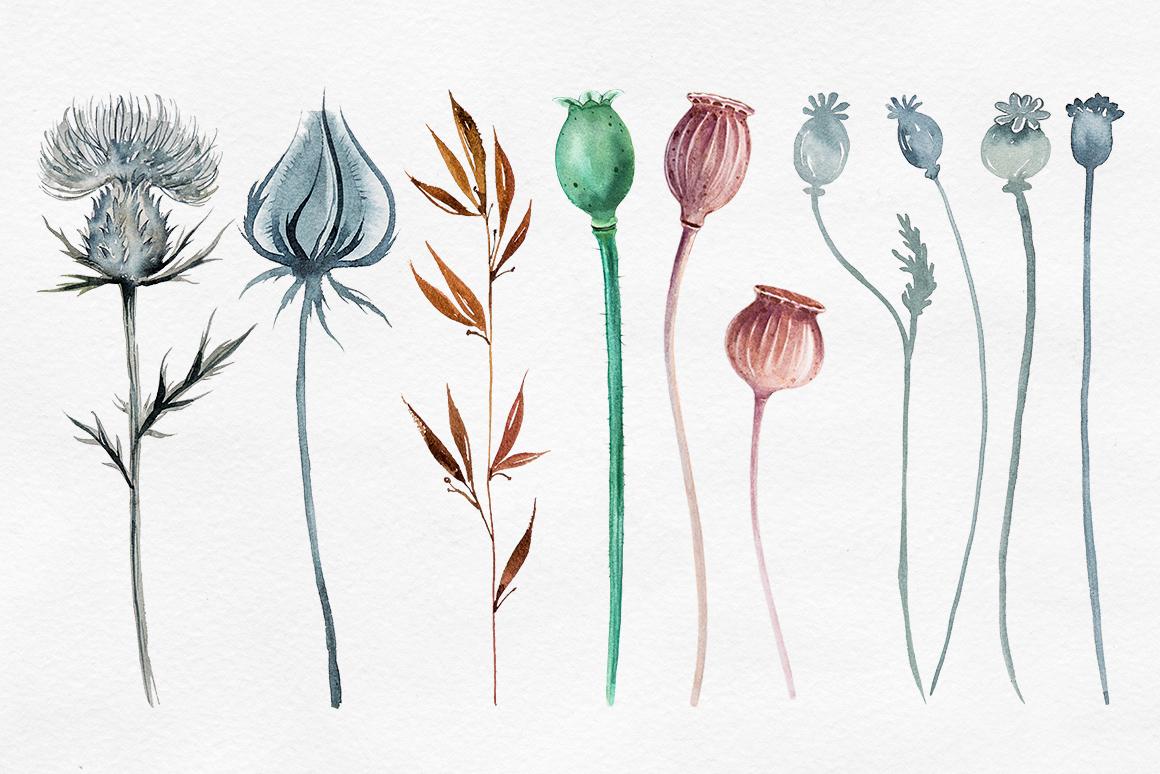 Herbarium Master Collection example image 4