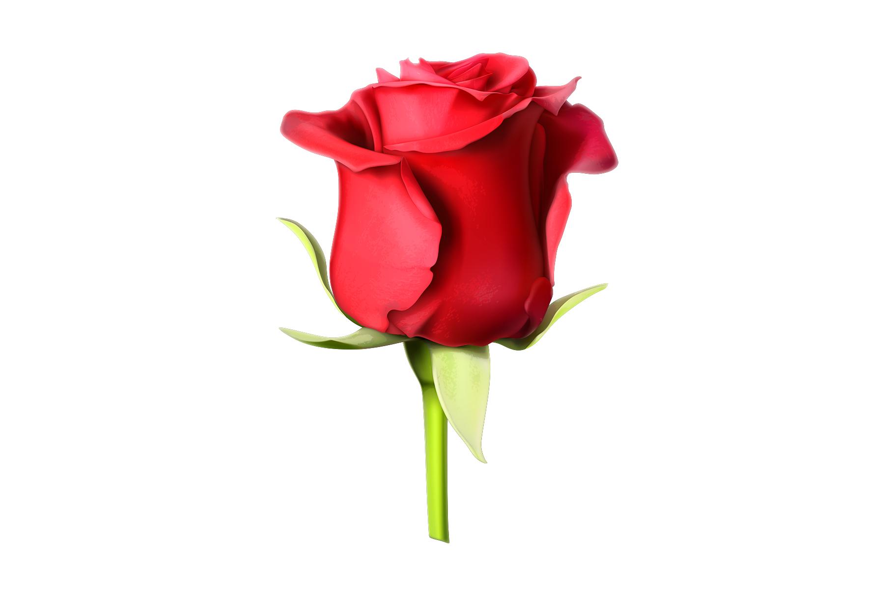 Rose, symbol of love, romantic Valentine's Day, vectors set example image 4