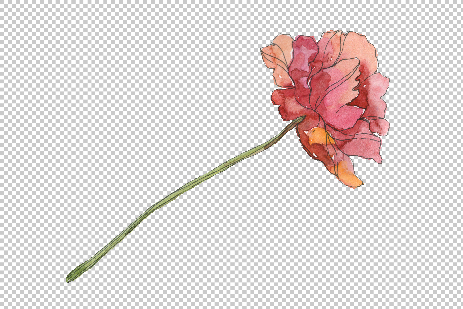 Poppy red Watercolor png example image 2