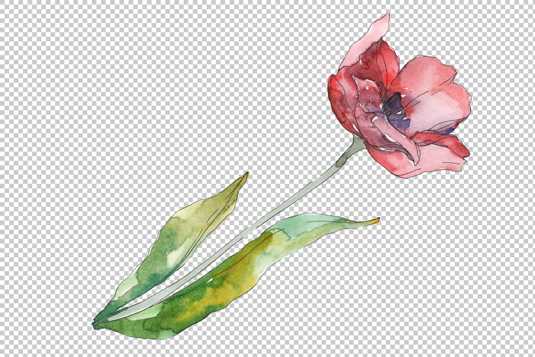 Bouquet of prometheus tulip Watercolor png example image 3