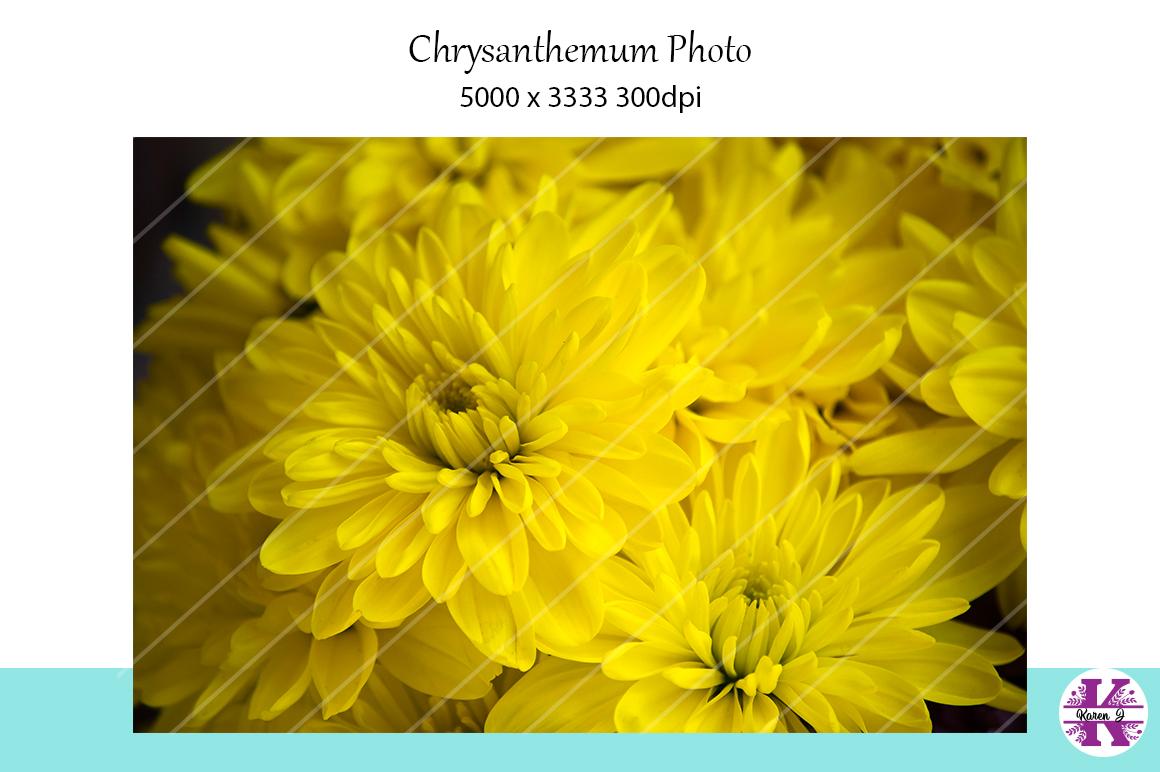 Chrysanthemum Photo example image 1