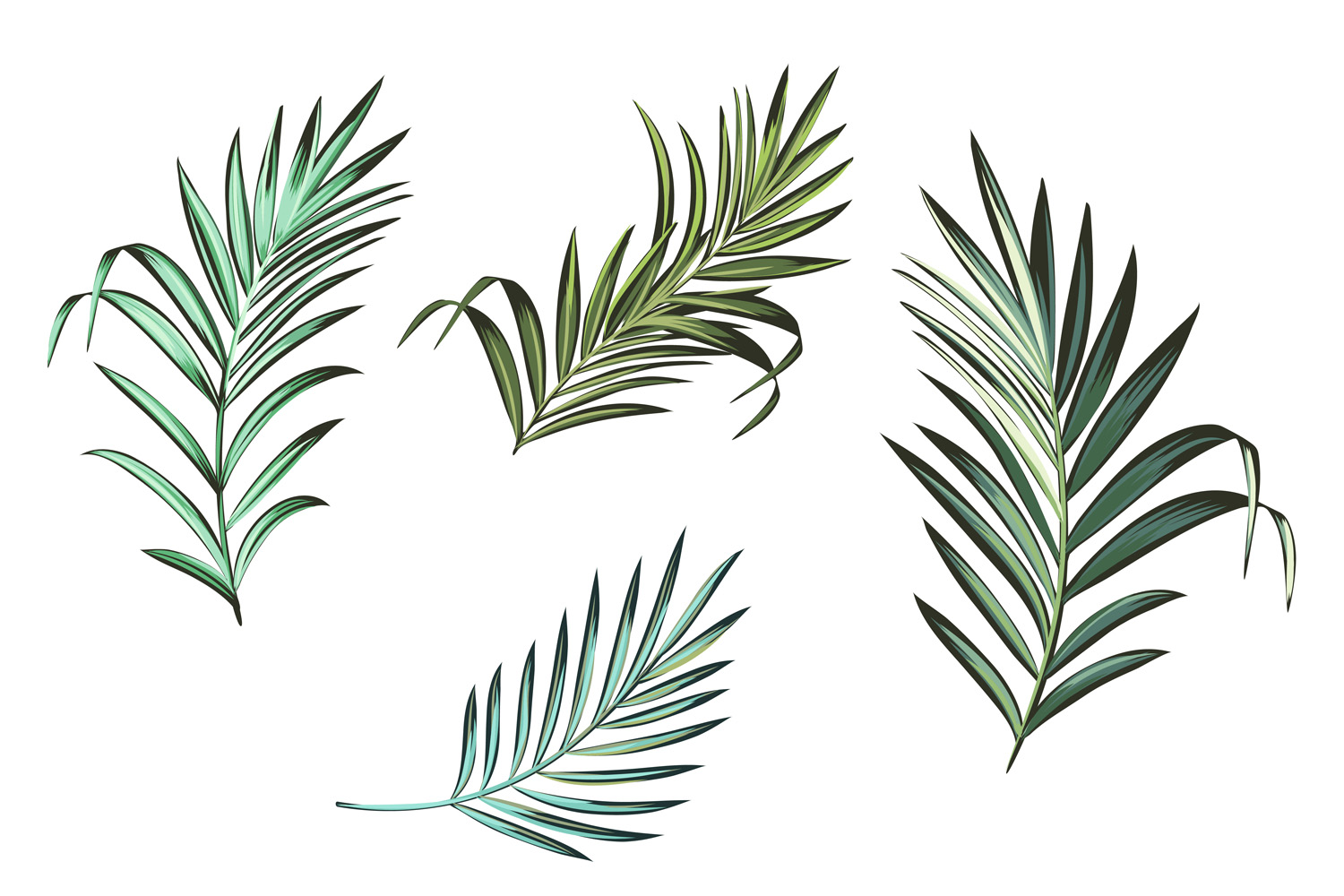 Palm leafs. Vector ClipArt set example image 2