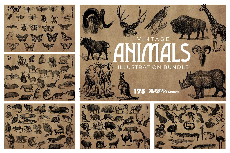 2200 Vintage Graphics Bundle example image 7