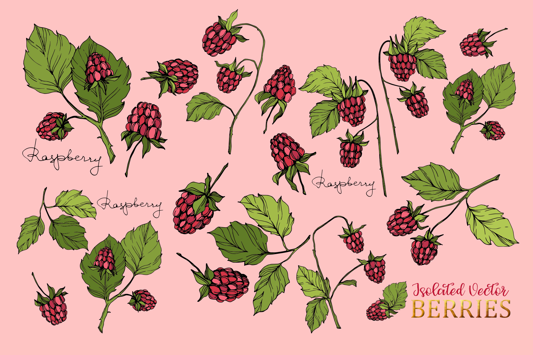 Raspberry Vector Collection example image 6