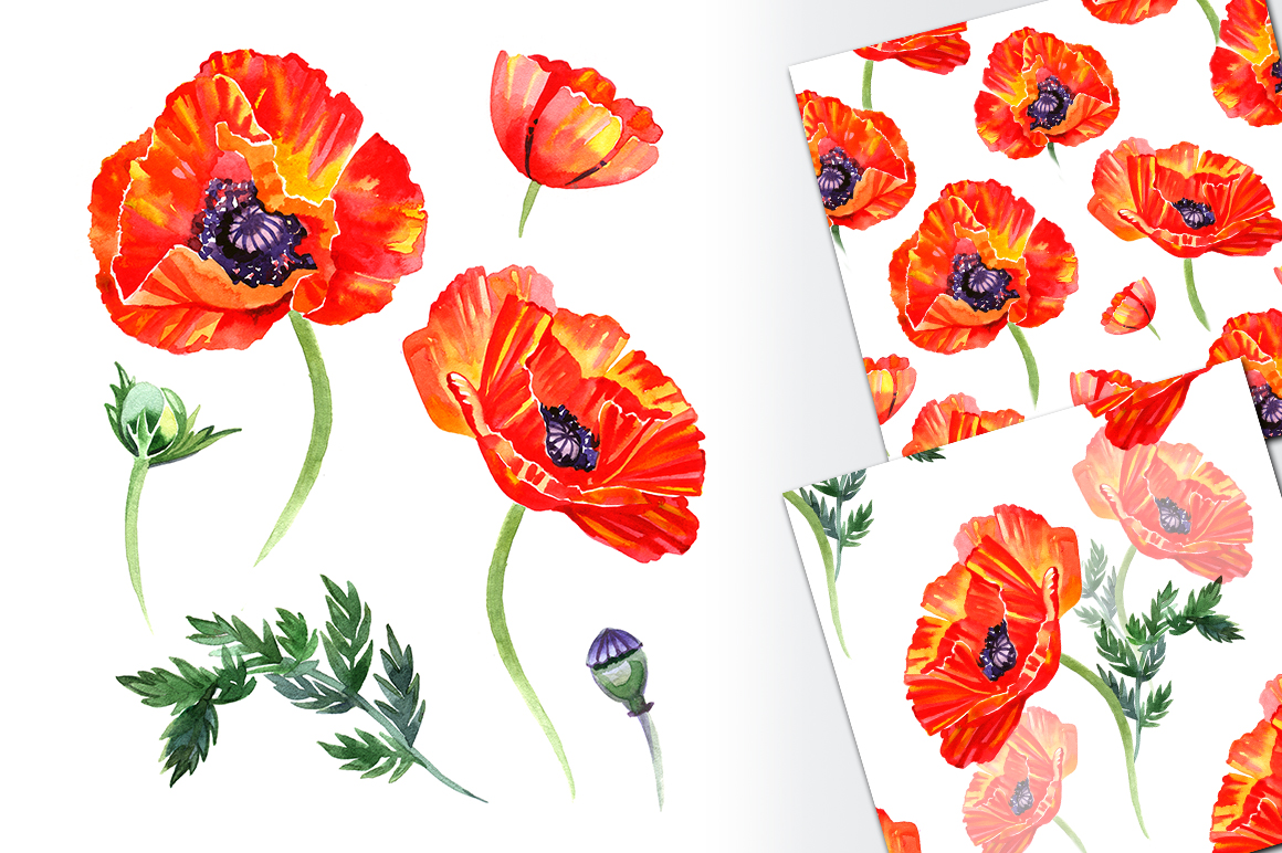Watercolor Poppy Flower Set By Natal Design Bundles