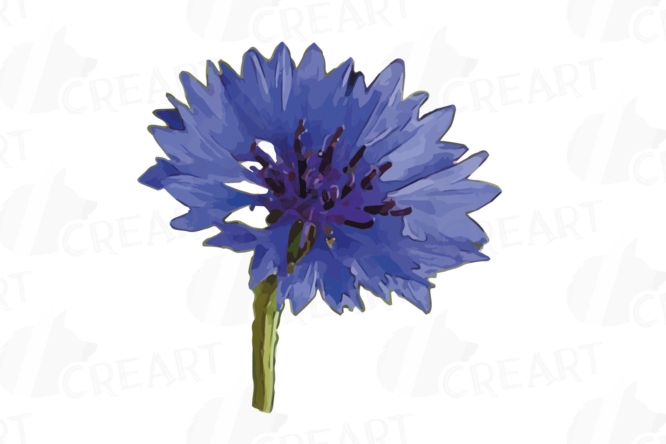 Cornflower watercolor clip art pack, bachelor's button example image 9