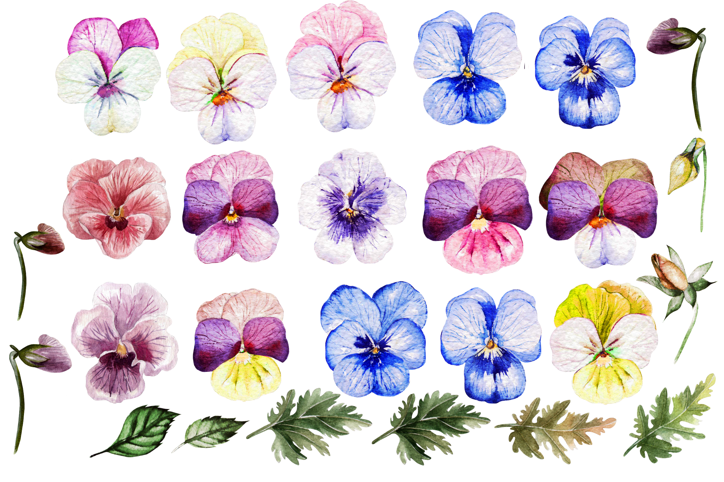 Watercolor PANSY FLOWERS example image 2