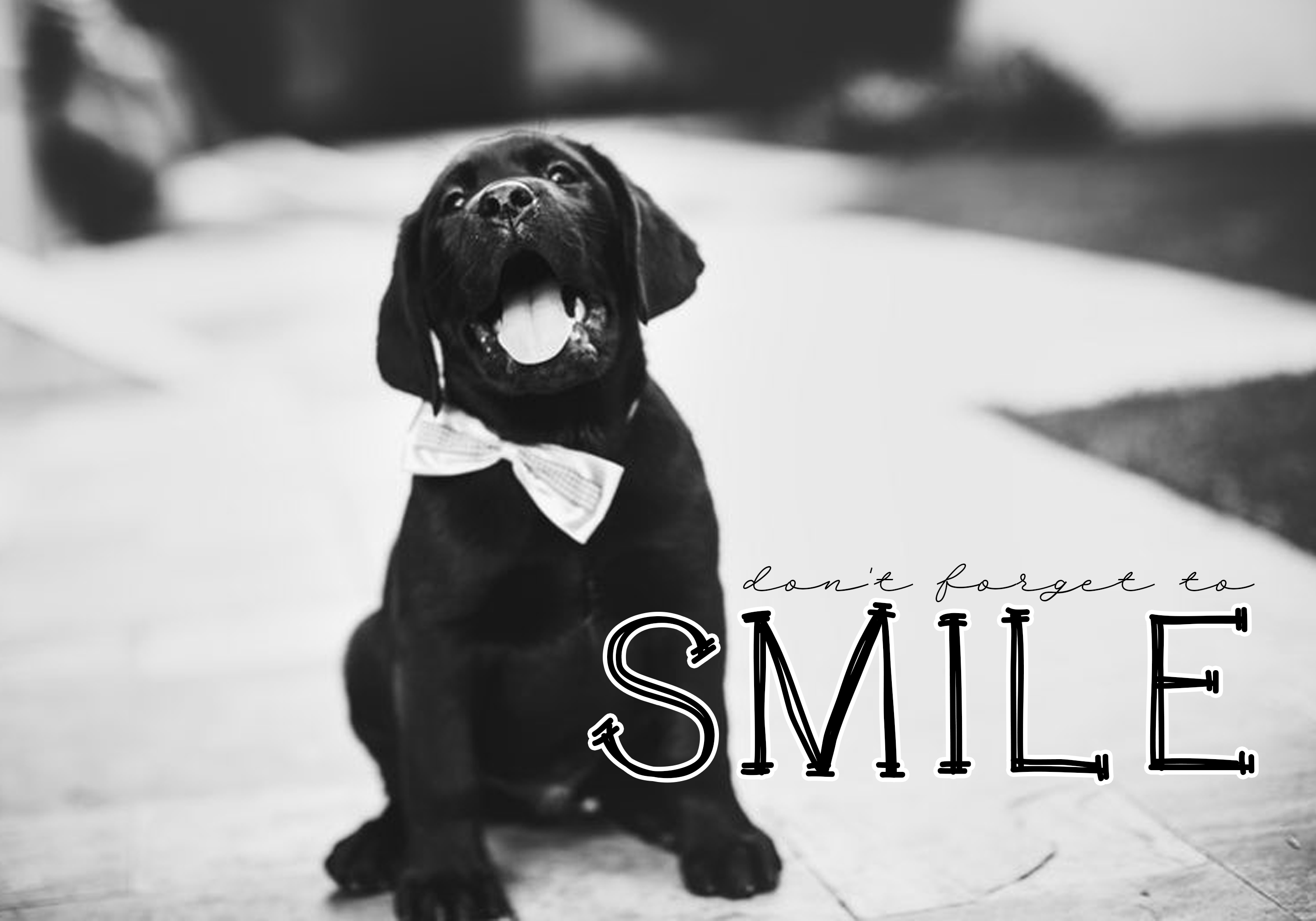 Cats and Dogs - A Cute Handwritten Font example image 5