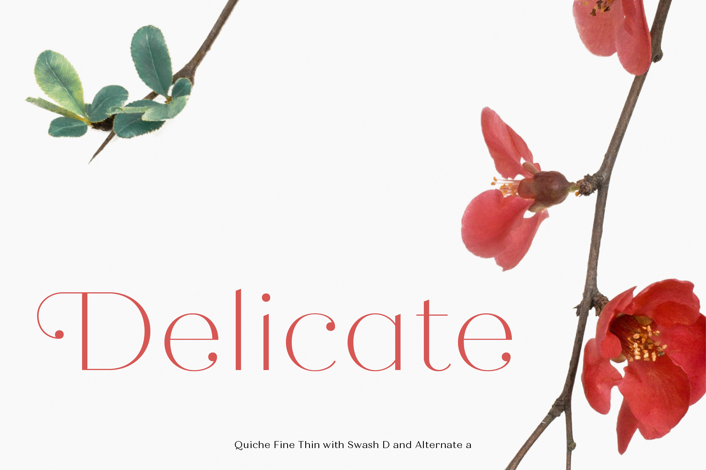 Quiche Font Family example image 13