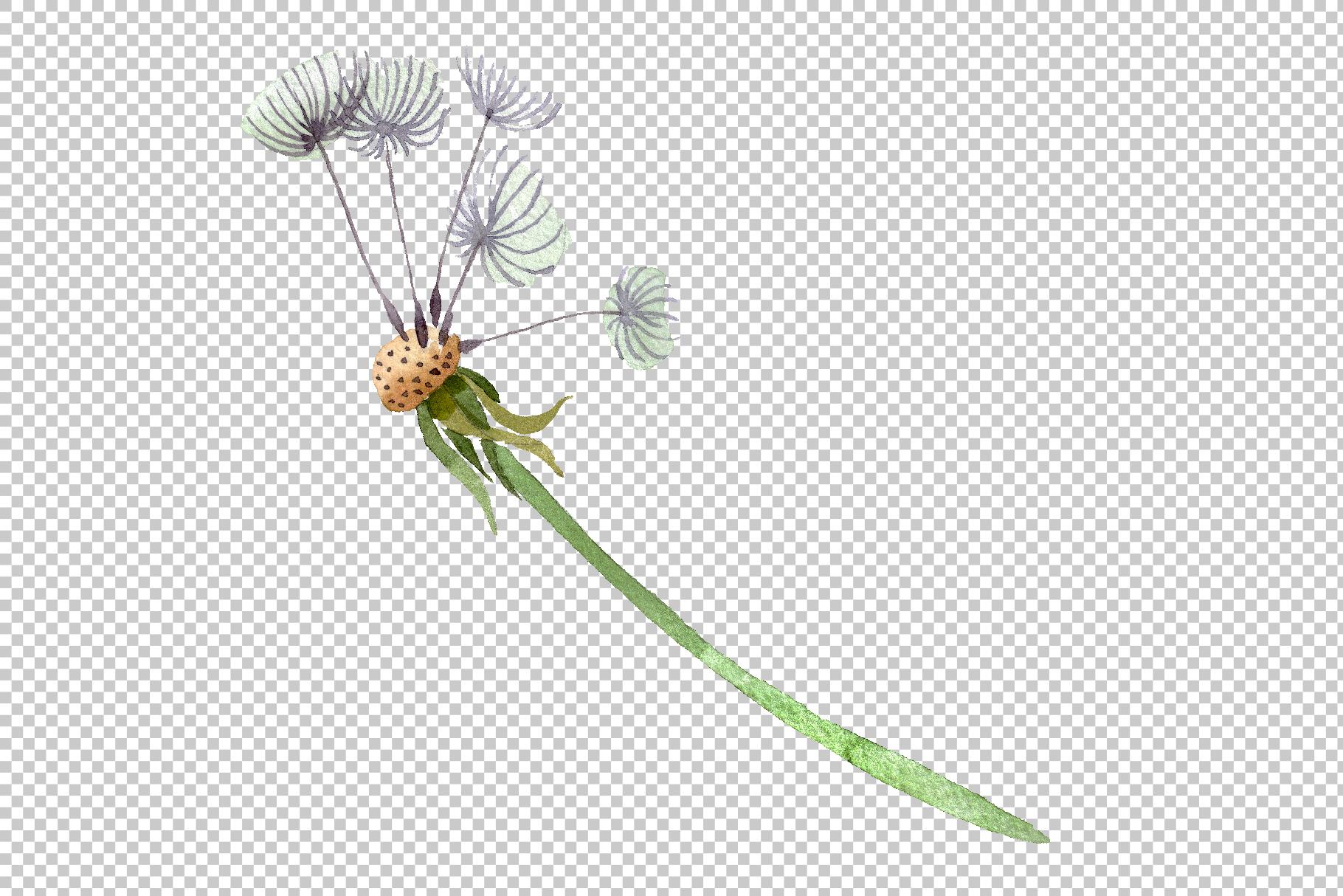 Dandelion summer greeting watercolor png example image 6