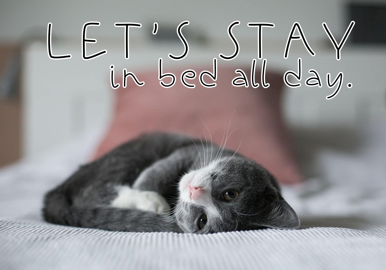 Black Kitten - A Handwritten Font example image 3