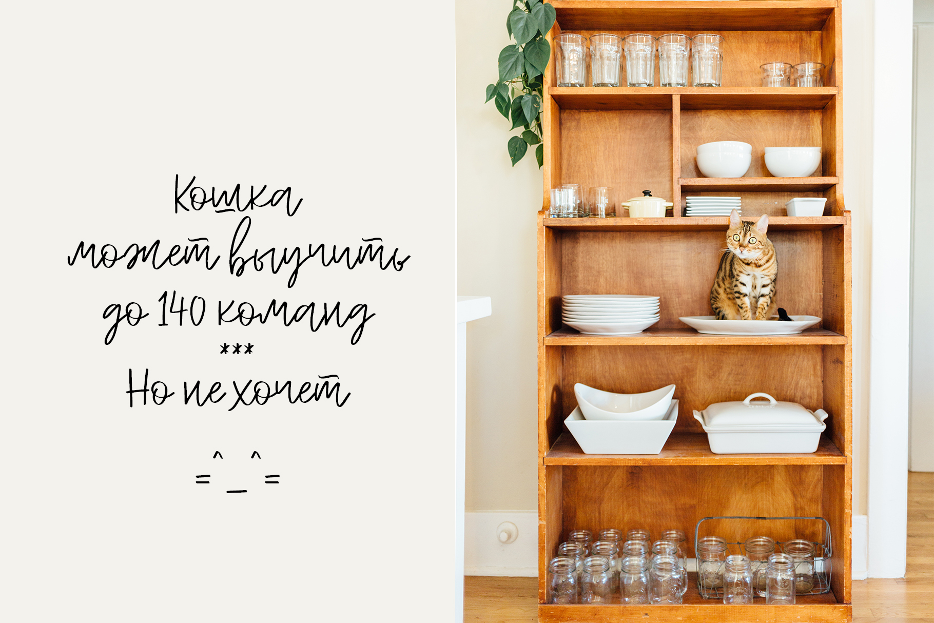 Peach Cream Latin & Cyrillic example image 7