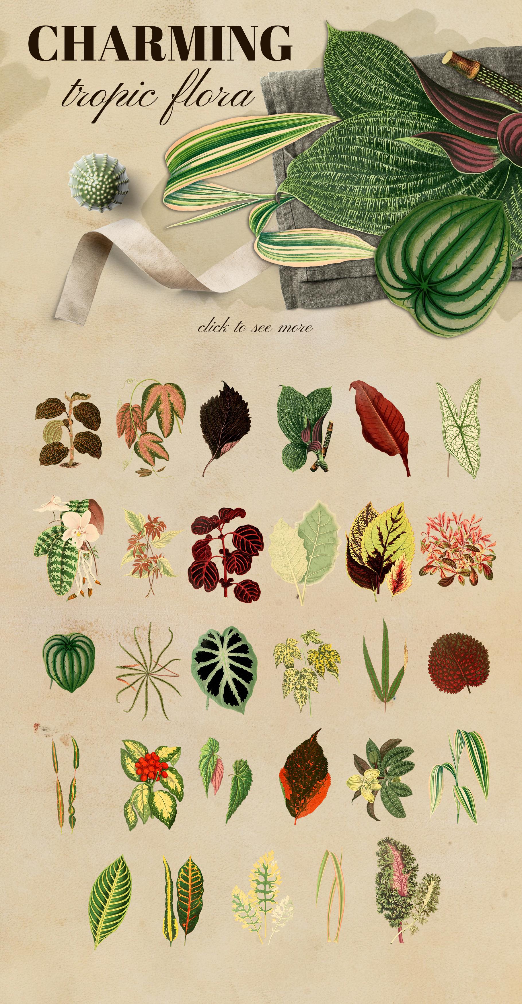 Vintage exotic herbarium design set example image 3