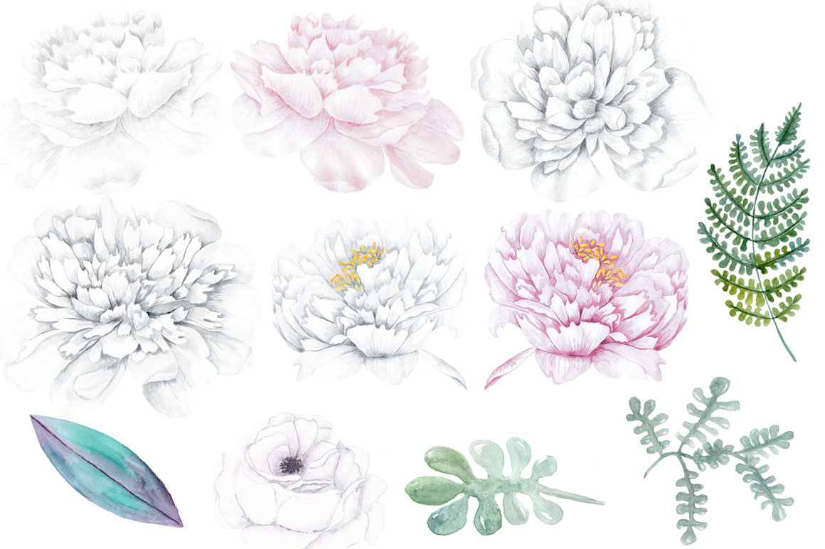 Watercolor white peony flowers clipart watercolor white peony flowers clipart example image 2 mightylinksfo