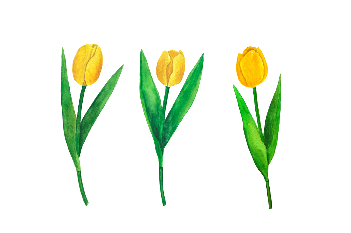 Flowers Tulips Watercolor example image 4