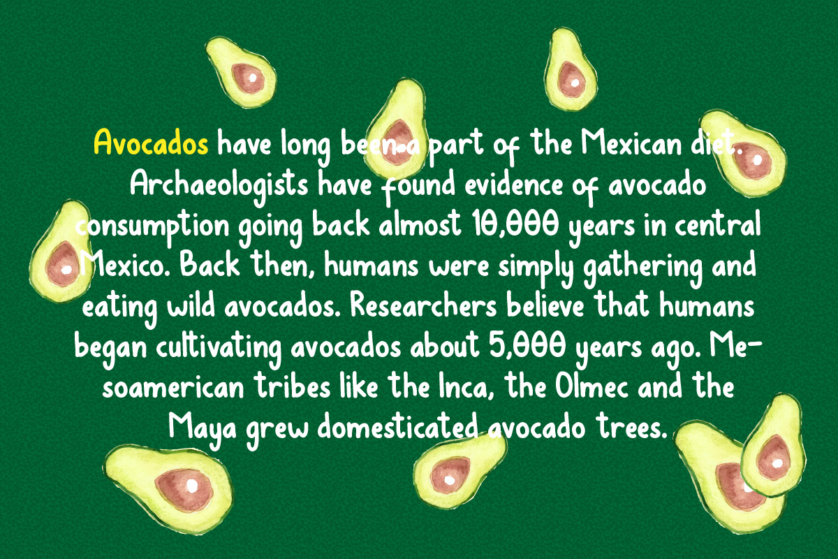 Avocados example image 6
