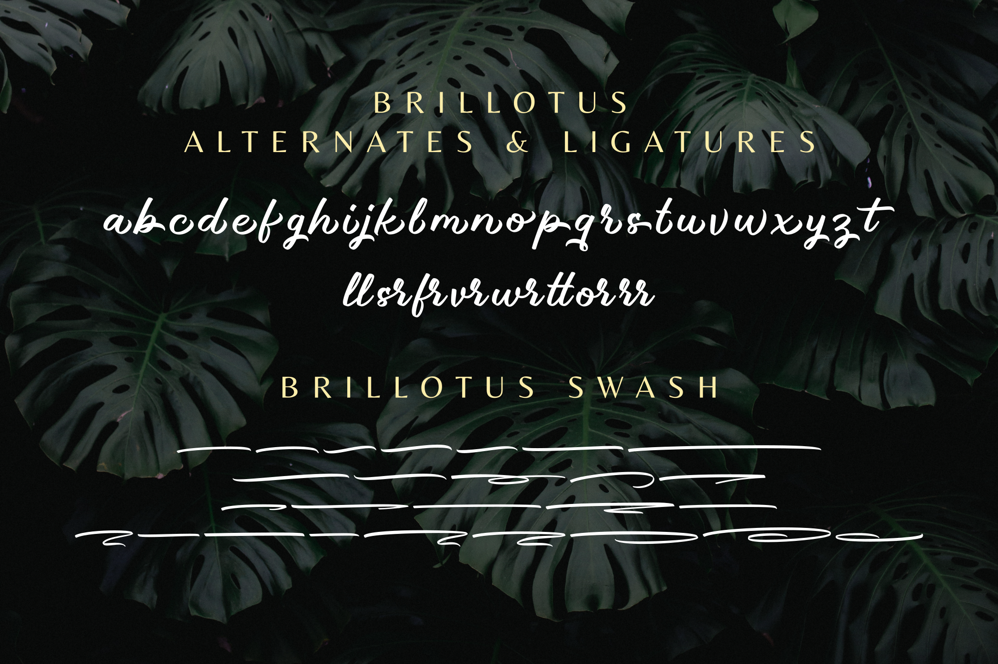Brillotus - Hand lettered Font example image 11