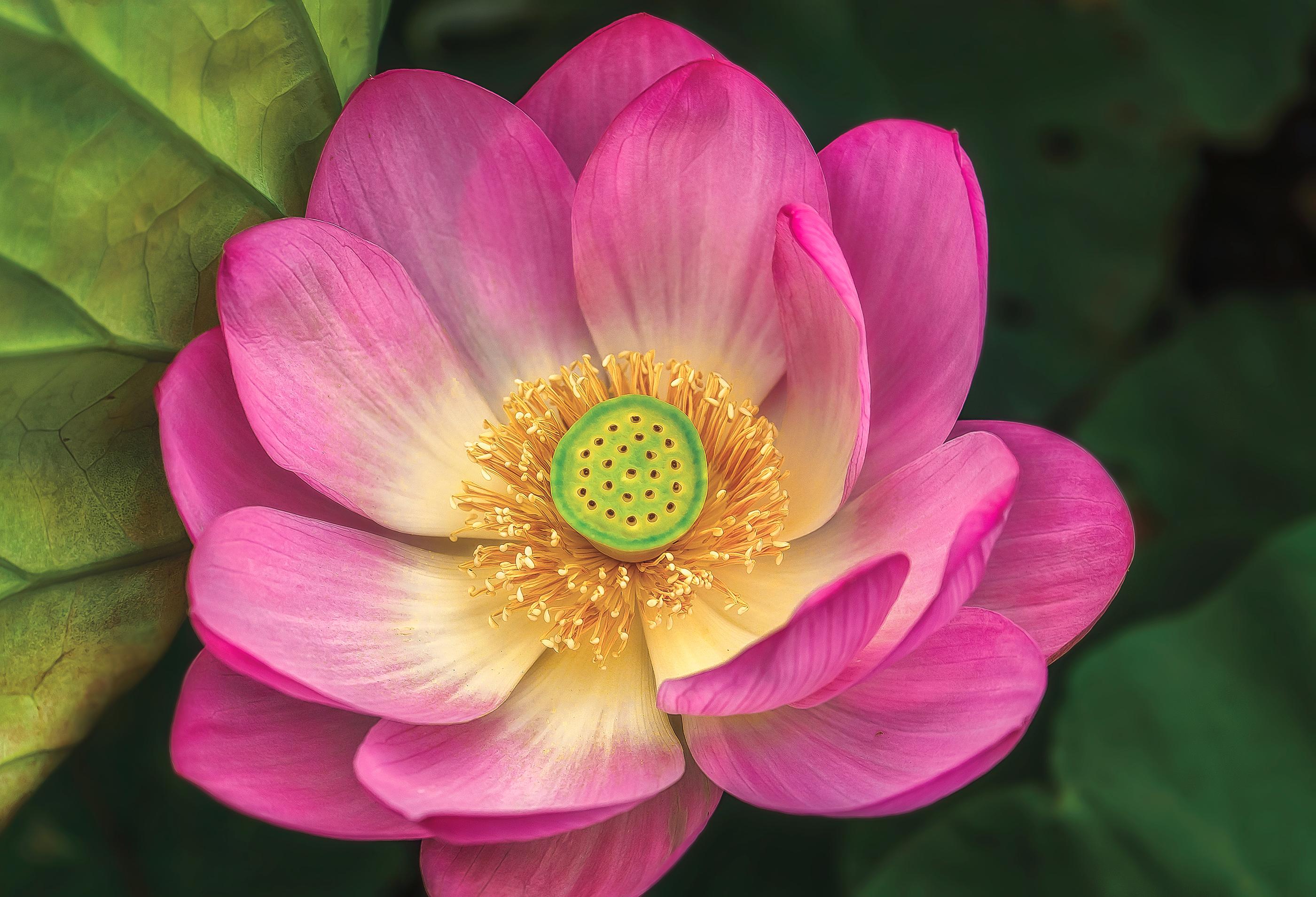 lotus example image 2