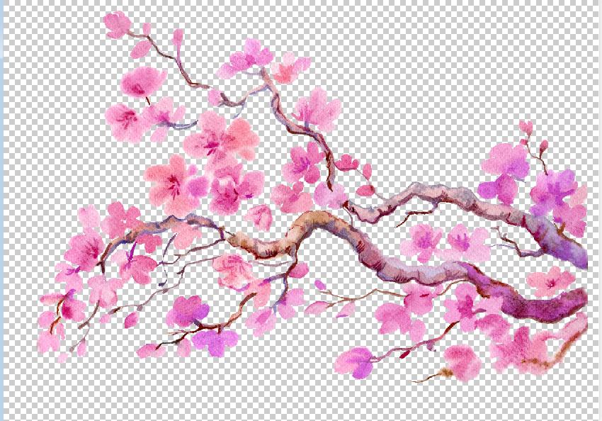 Sakura flowers, clipart,watercolor example image 4