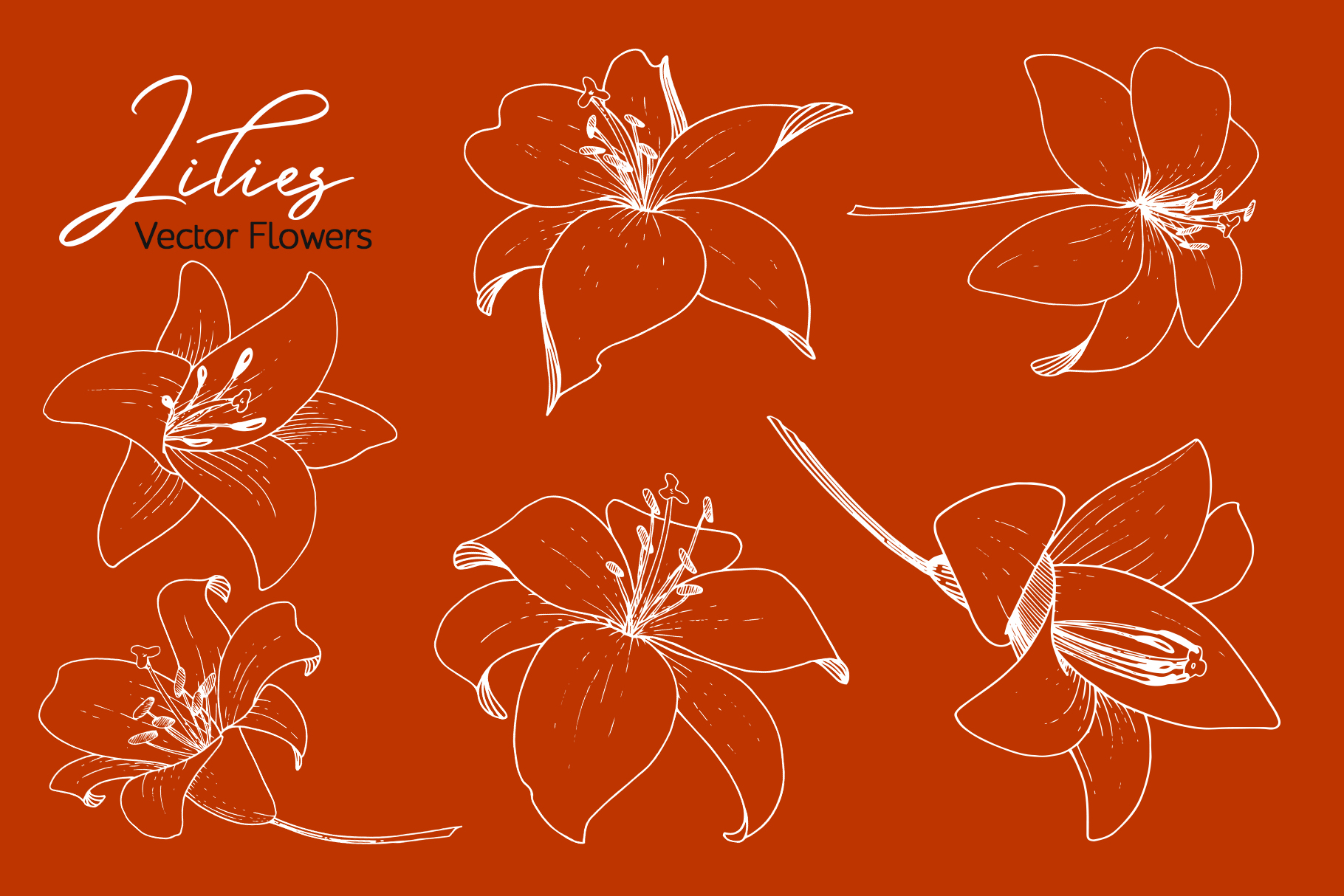 Lilies Vector Collection example image 2