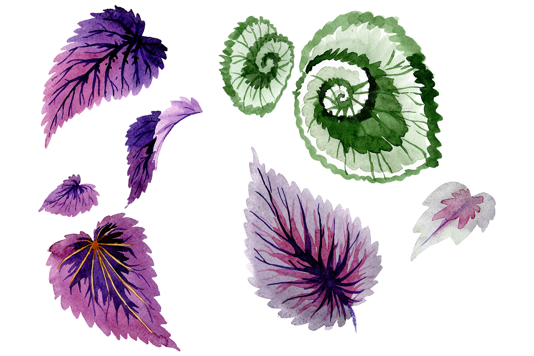 Begonia leaves Watercolor png example image 1