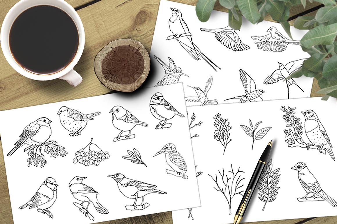 Sketch birds. Vector set. example image 1