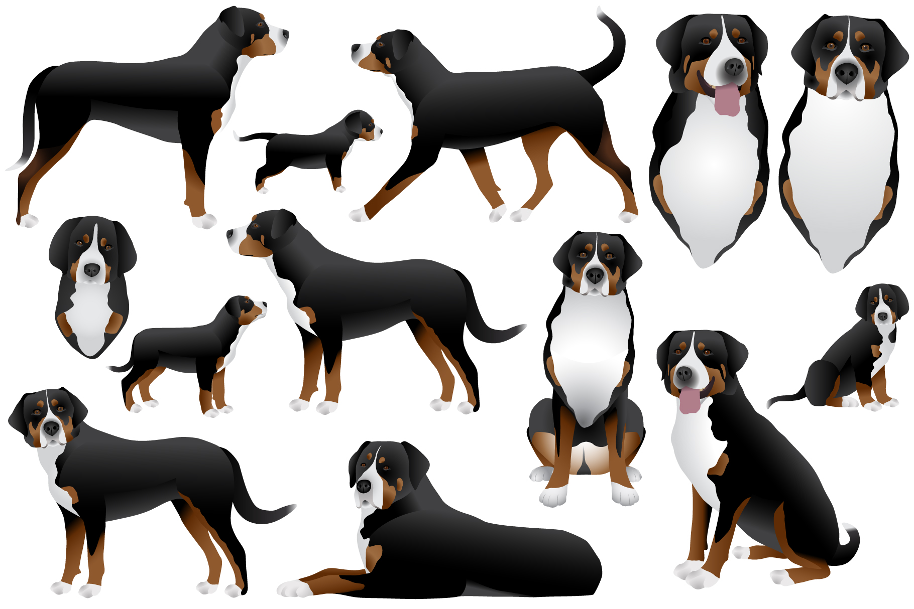 Greater swiss mountain dog example image 1