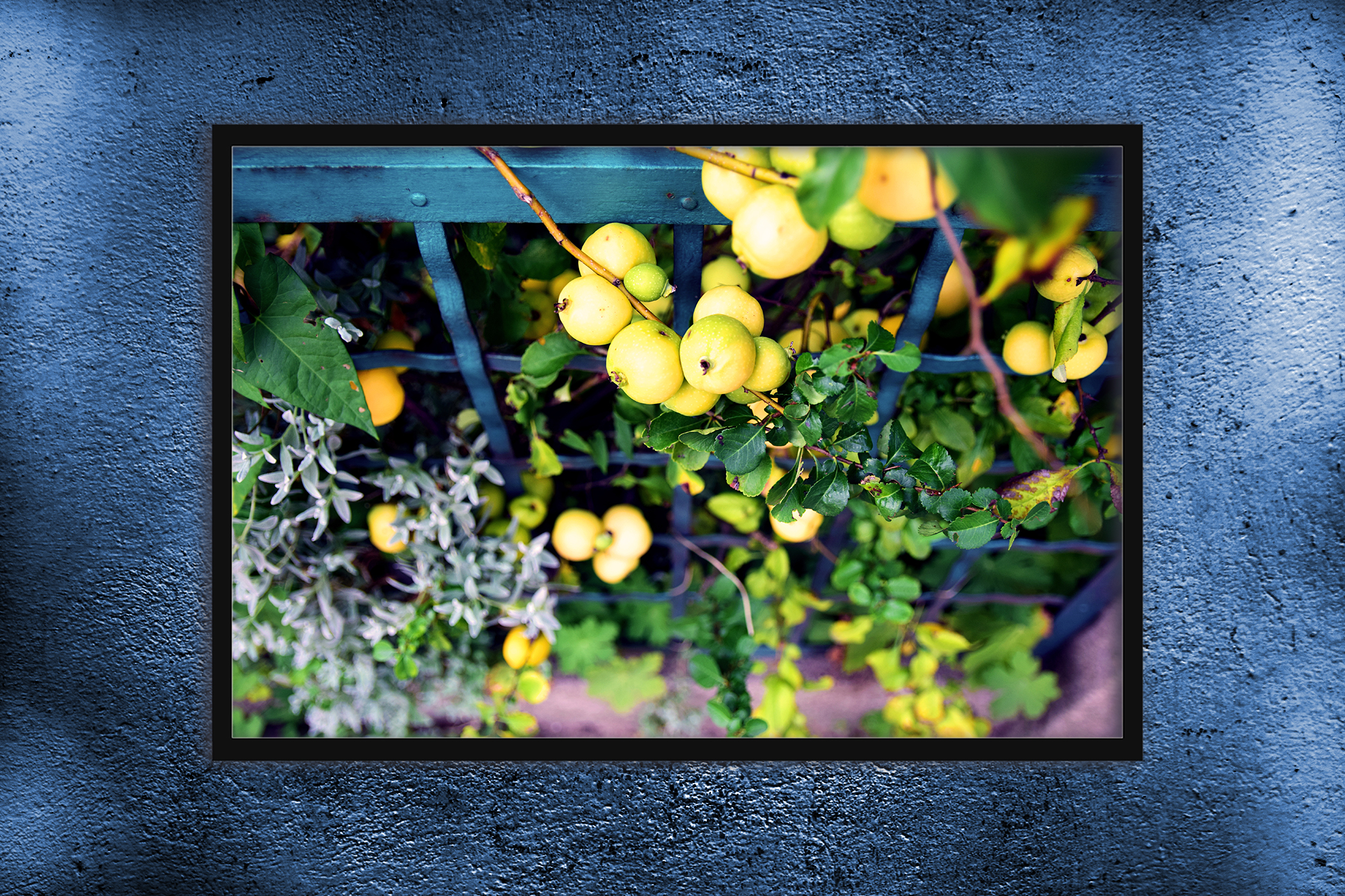 Nature photo, floral photo, flower photo, summer example image 4