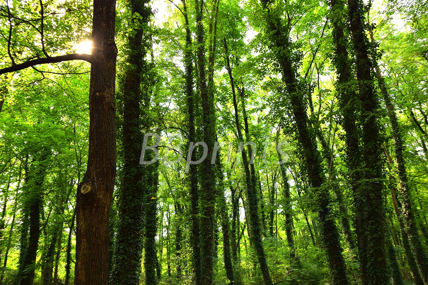 Nature photo, landscape photo, forest photo, spring photo example image 1