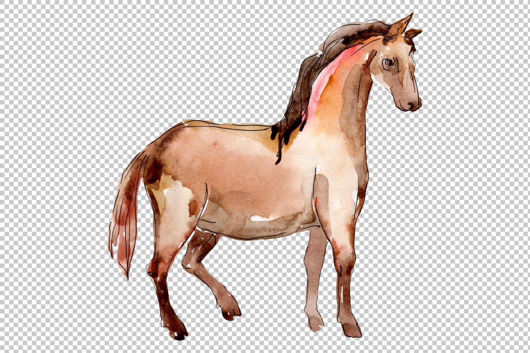 Farm animals Horse, foal Watercolor png example image 5