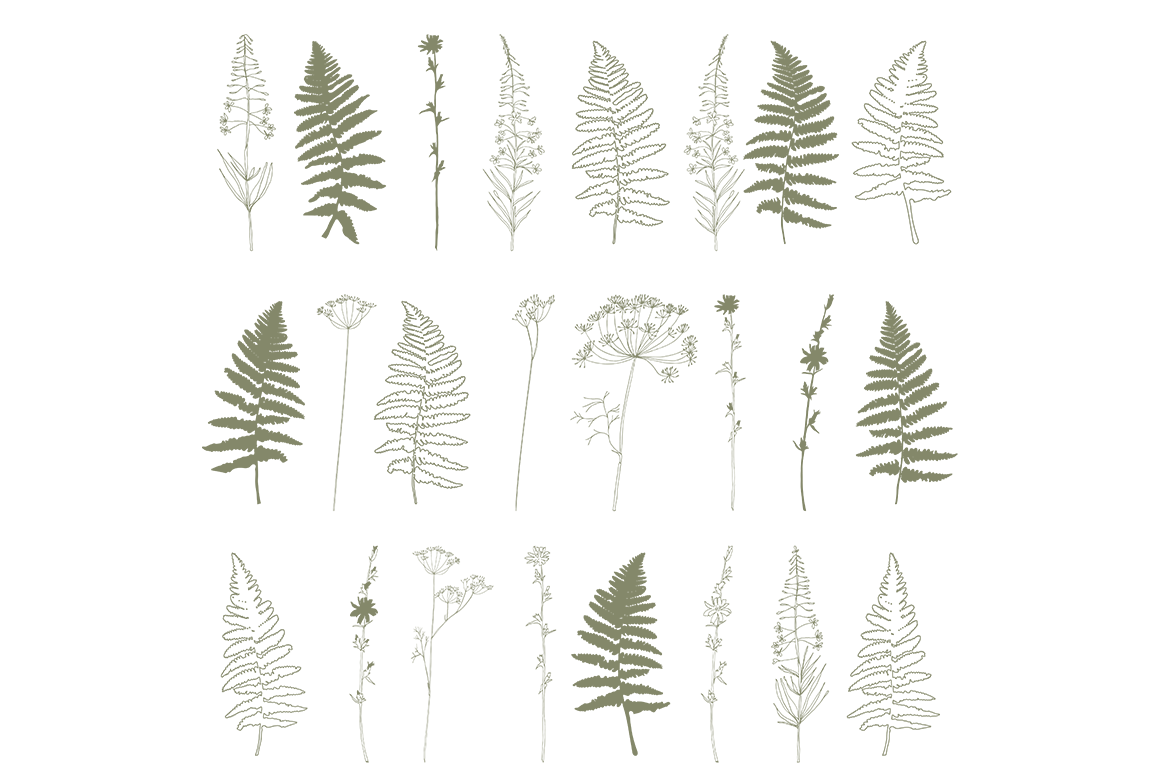 Hand drawn wild flowers and fern leaves example image 7