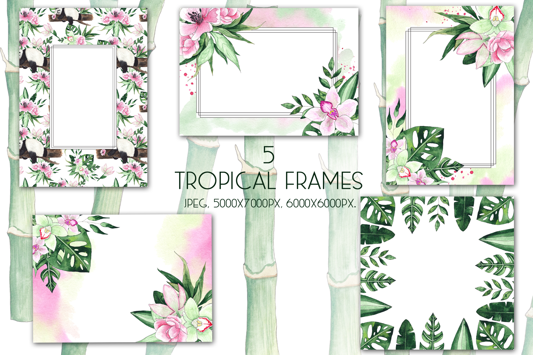 Pandas. Tropical collection example image 9