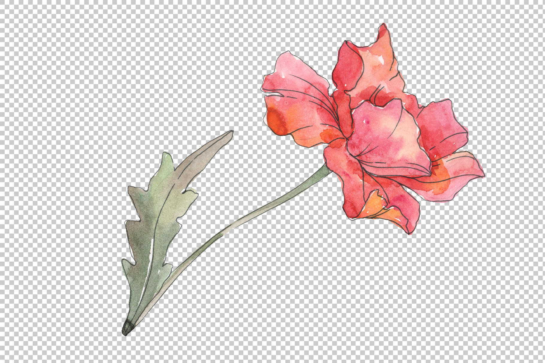 Poppy red Watercolor png example image 3