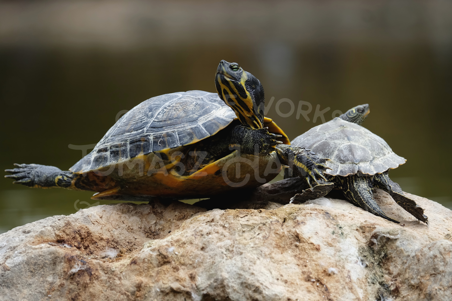 Turtle Photo Pack example image 3