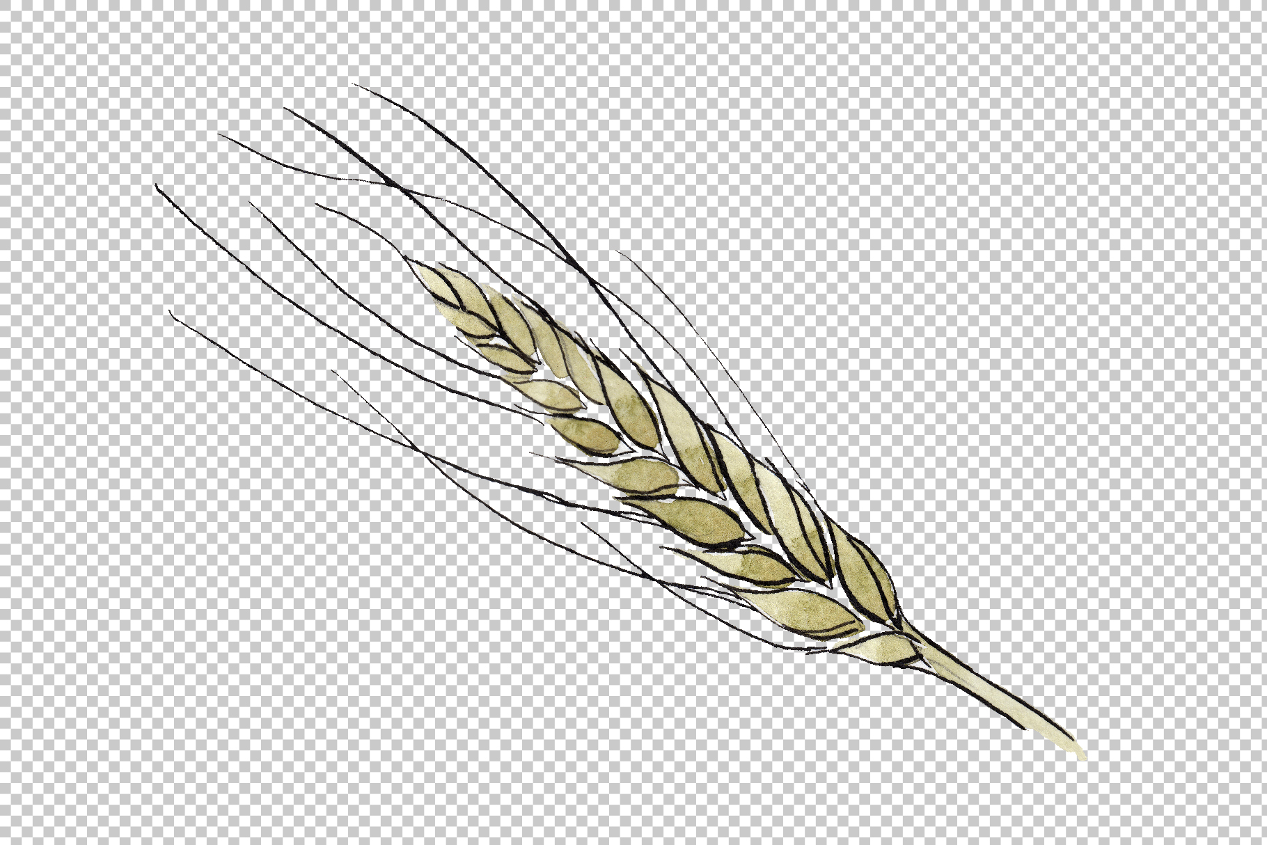 Spike of wheat Watercolor png example image 8
