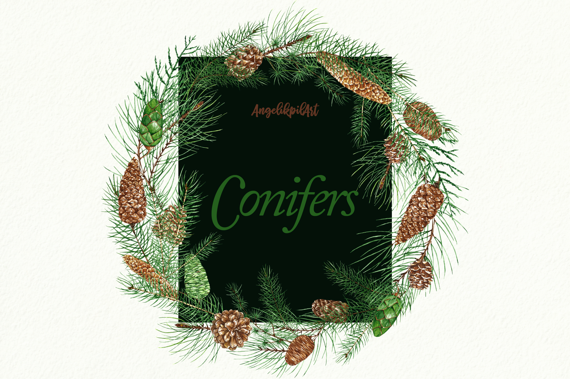 Conifers. Cones&Twigs watercolor example image 6
