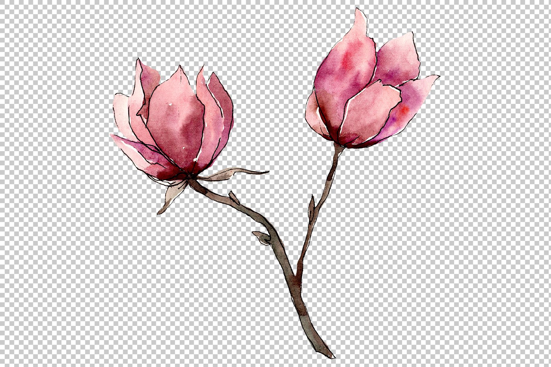 Tender pink magnolia PNG watercolor set example image 5