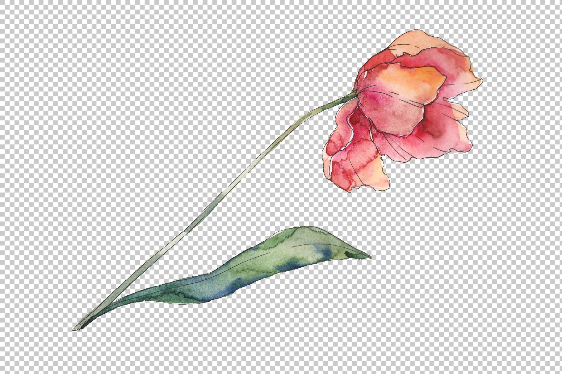 Bouquet of prometheus tulip Watercolor png example image 4