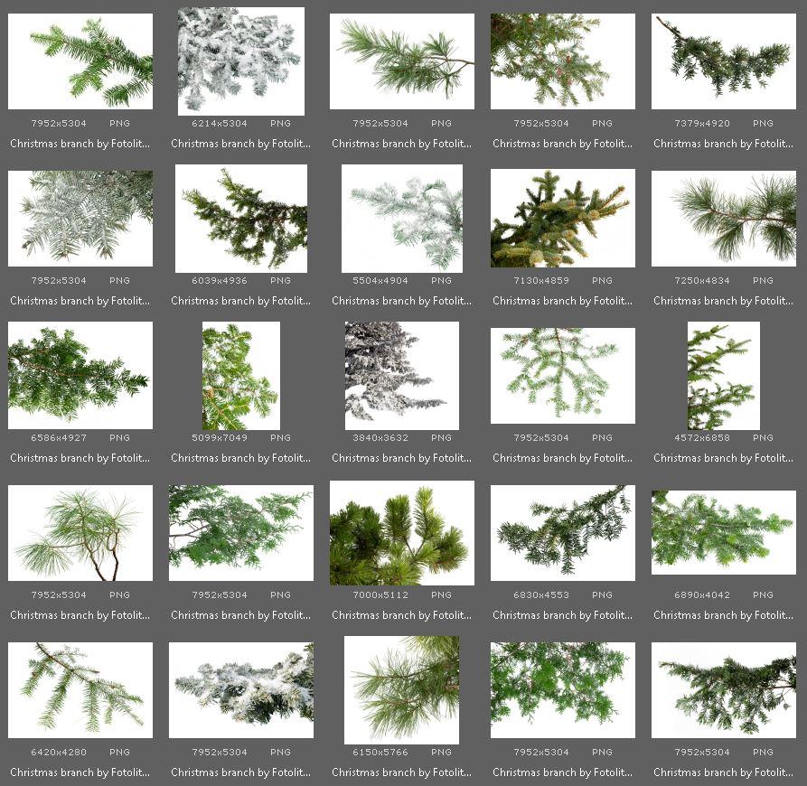 50 Christmas Tree Branch Overlays example image 4