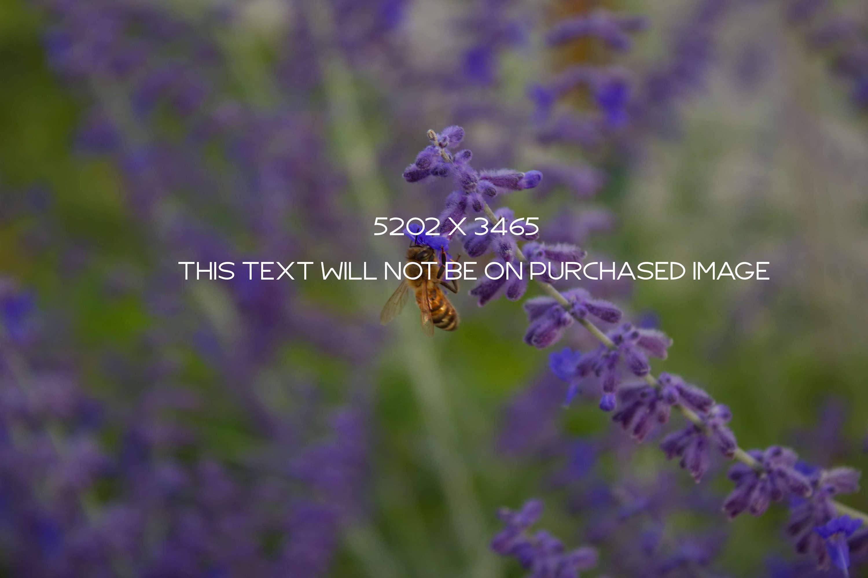 Botanical Photo Bundle, Large Nature Photos example image 12
