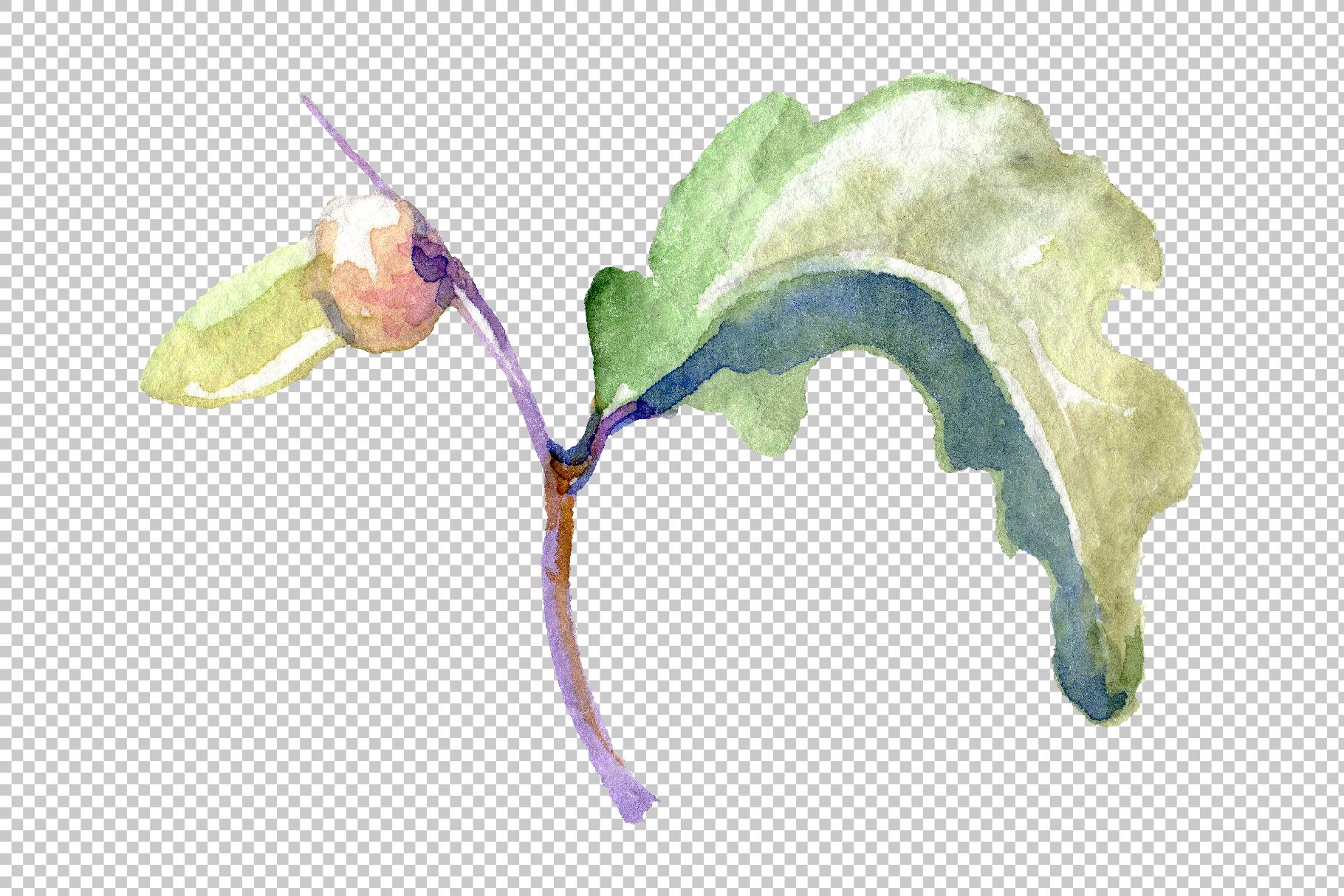 Acorn Watercolor png example image 8