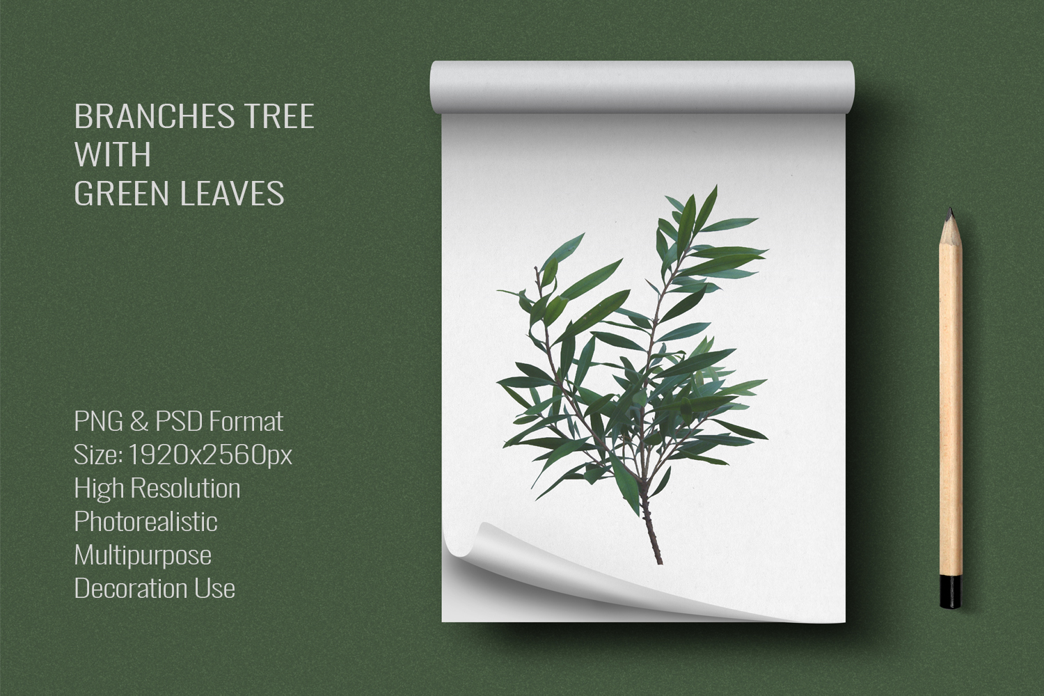 Three Branches Tree With Green Leaves PNG|PSD example image 6