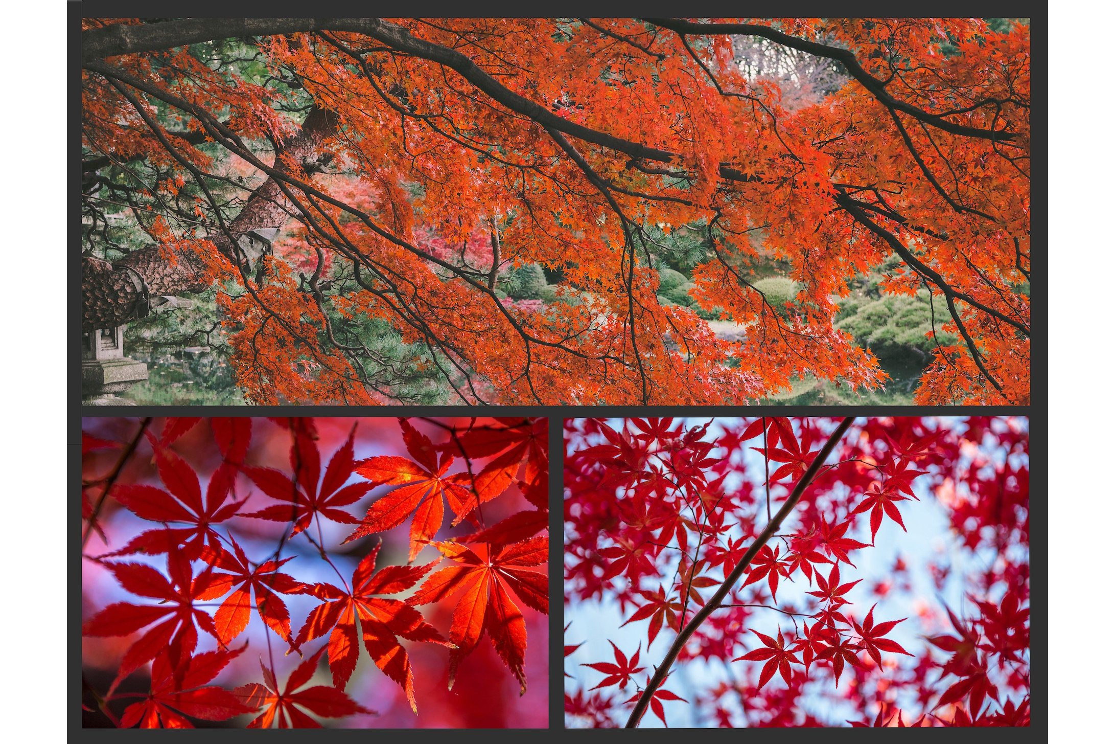 The AUTUMN LEAVES Pack example image 4