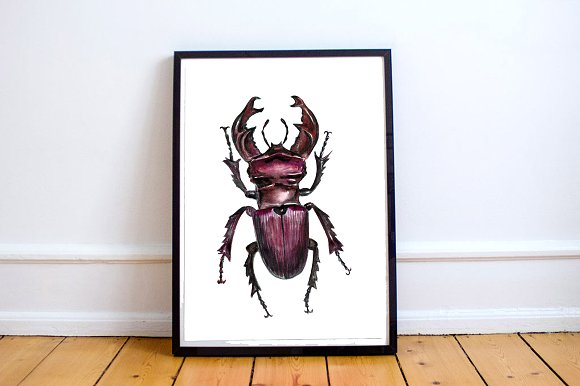 Watercolor Beetles Clipart & Print example image 5